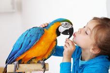 Indoor Bird
