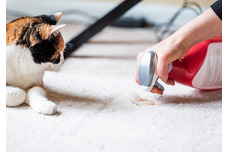 Cat Cleaning