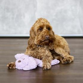 Aromadog Calm Laying Down Dog